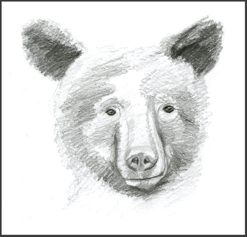 Black Bear Sketch