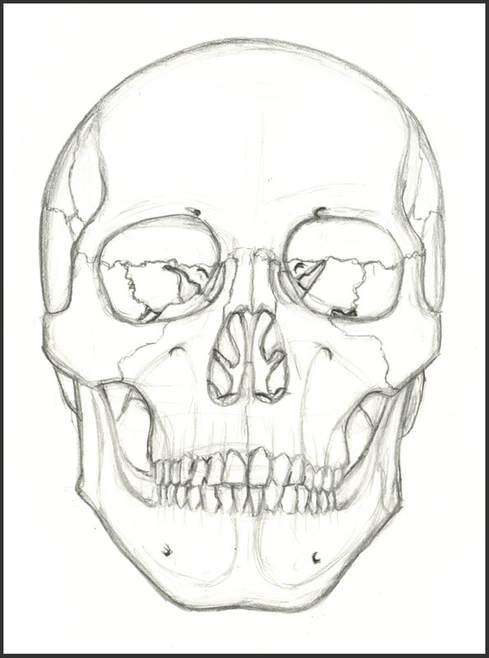 Anterior View of Skull