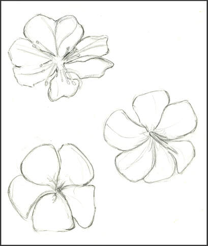 Sketch of coconut flowers by Amanda Barnaby