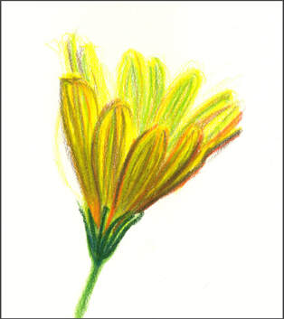 Yellow Flower color sketch